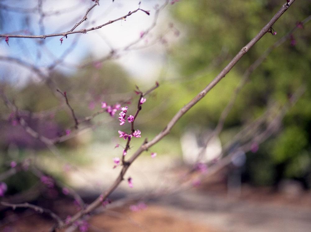 stacikennelly_losangeles_april_10