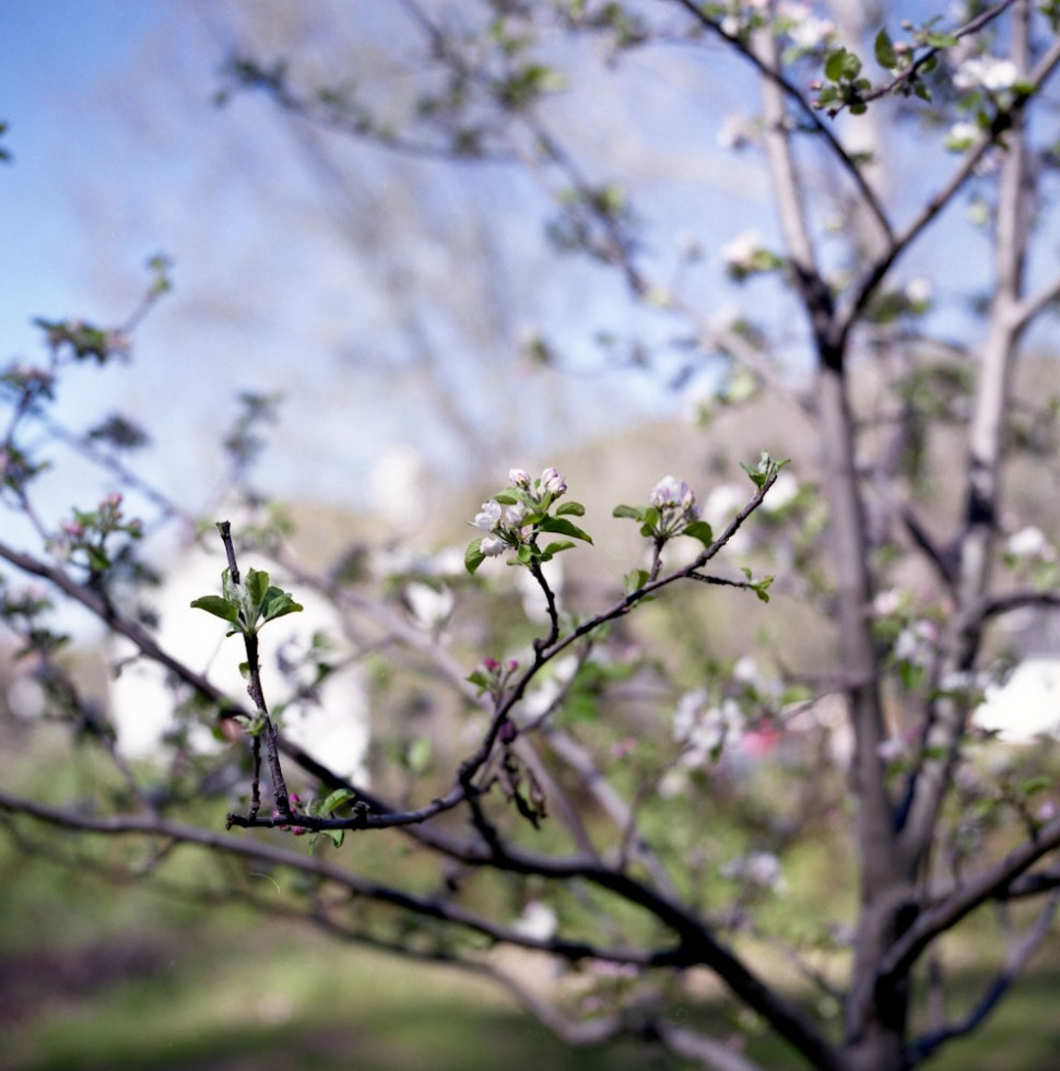 aprilmaybe1