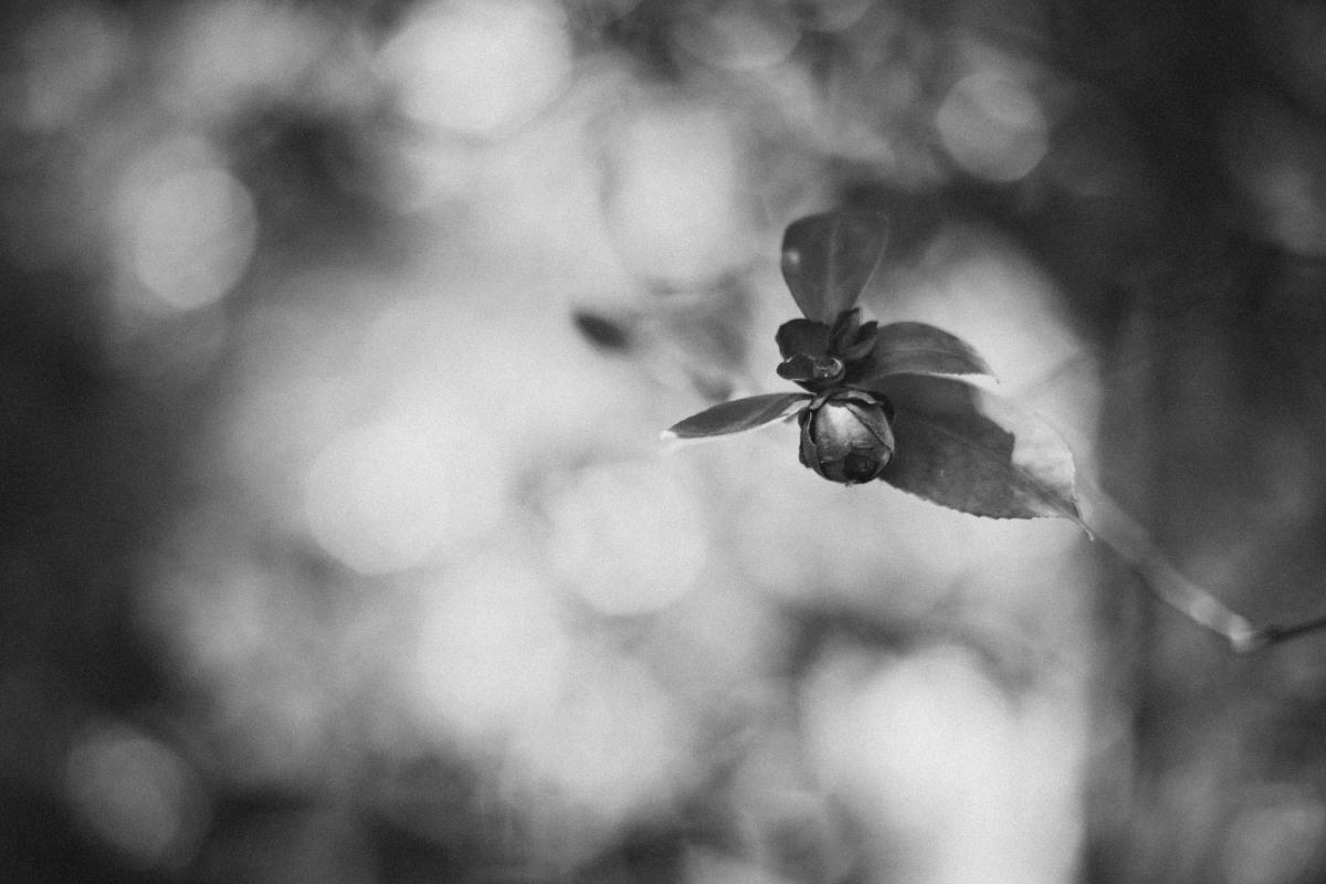 deadflower