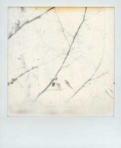polaroids-2