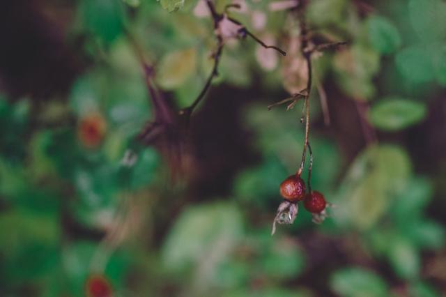 berry-3