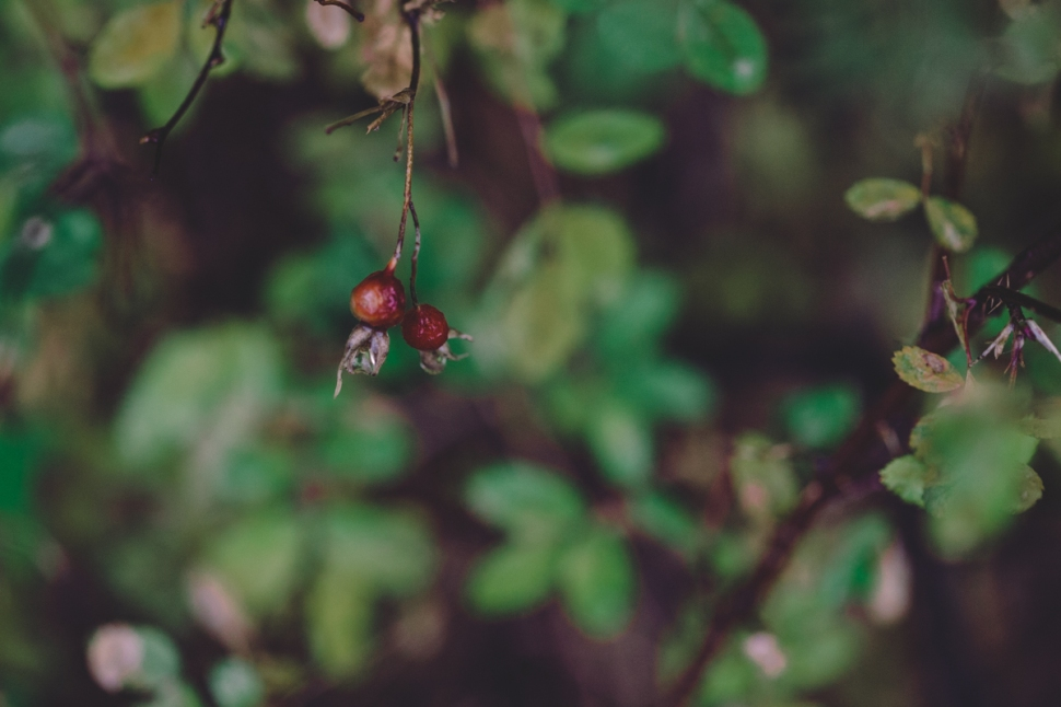 berry-4