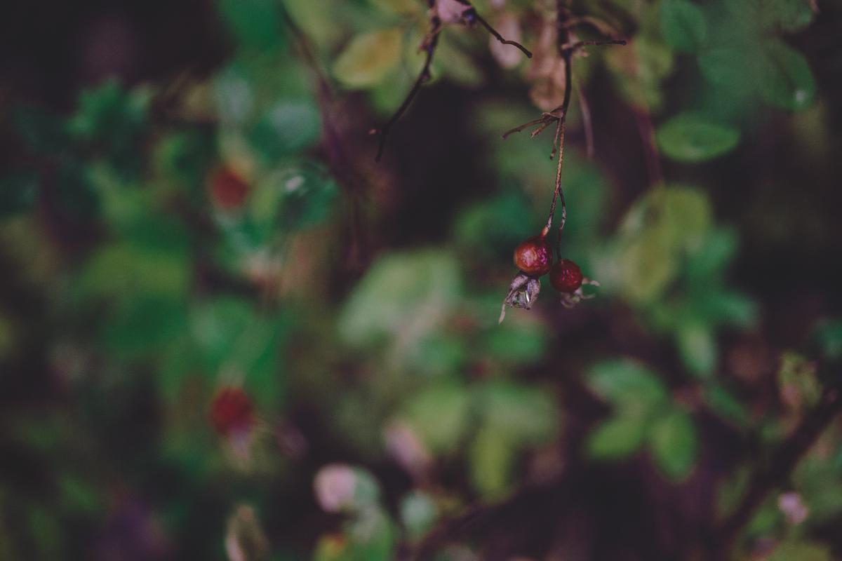 berry-5