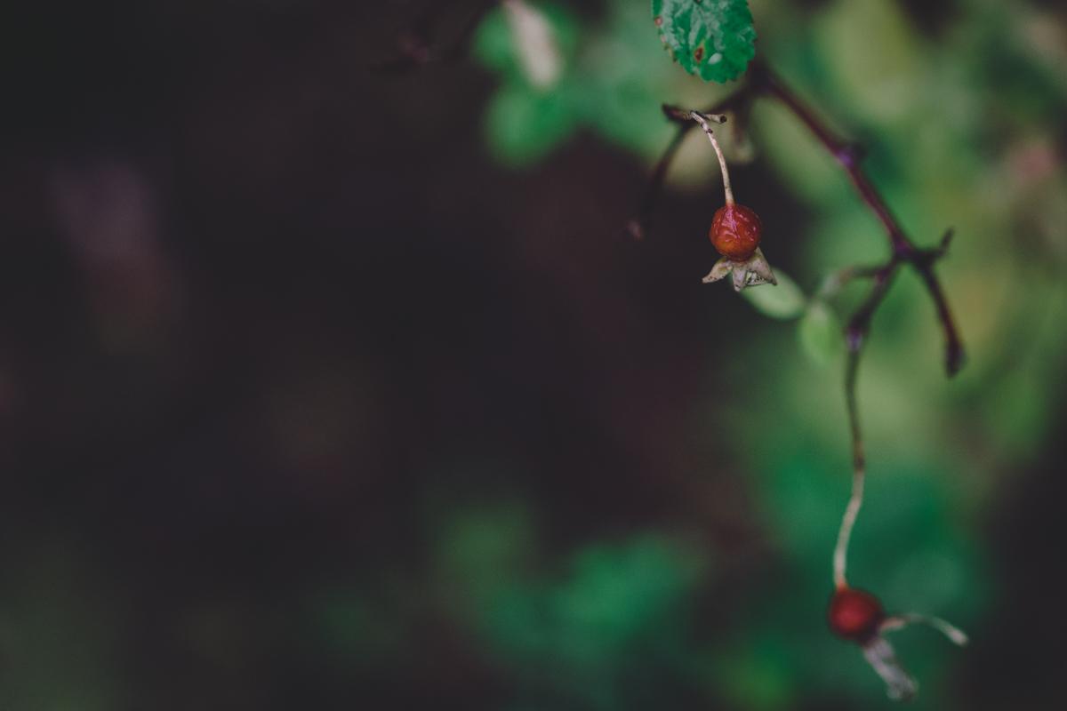 berry-7