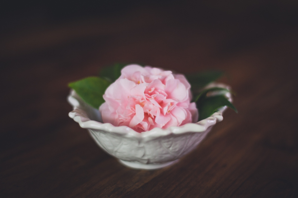 camellia-7