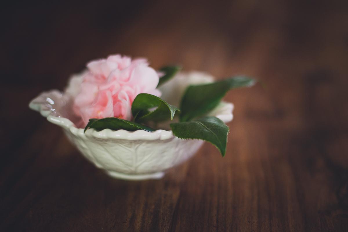 camellia-8