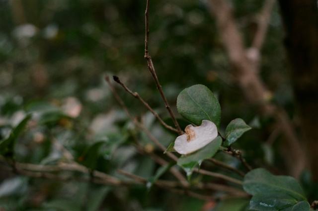 nature-2