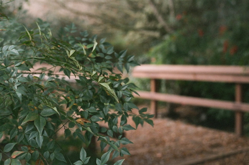 nature-7