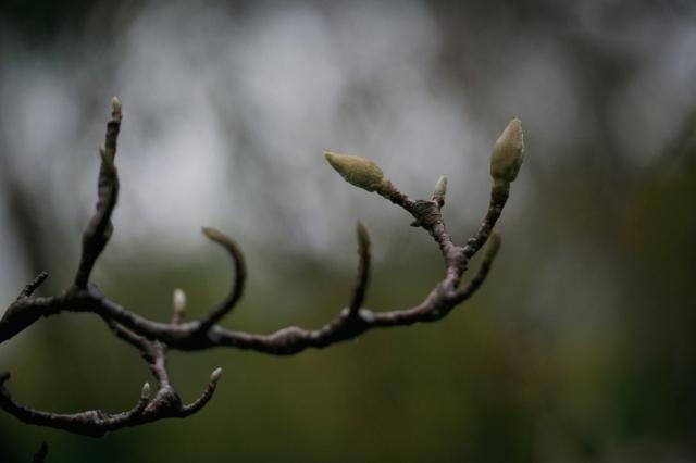 raintree-3