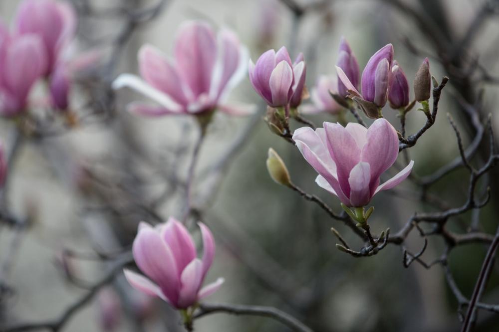 bloom17-13