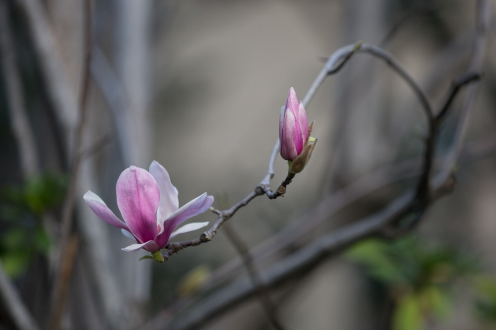 bloom17-4